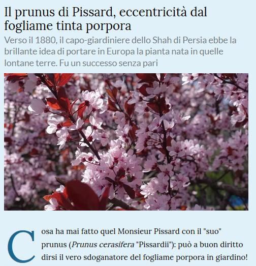 Le piante della salute Prunus10