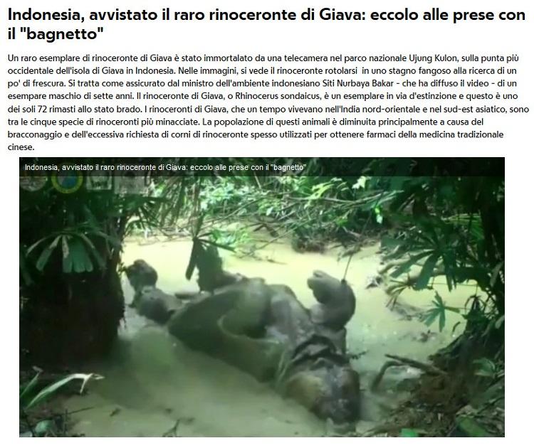 Notizie di animali....nel mondo - Pagina 4 Rino_d10
