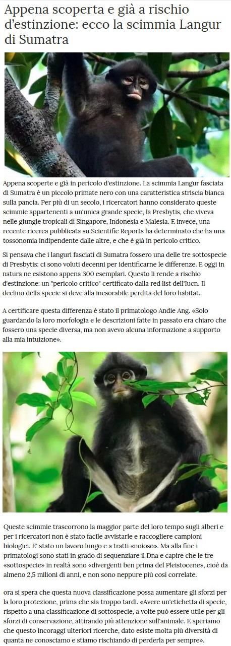Notizie di animali....nel mondo - Pagina 4 Scimmi10