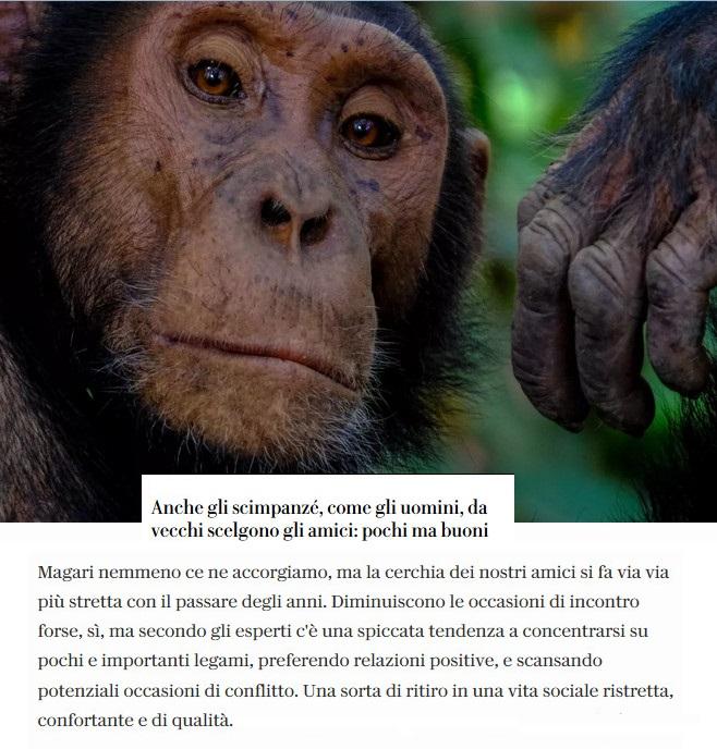 Notizie di animali....nel mondo - Pagina 8 Scimpa11