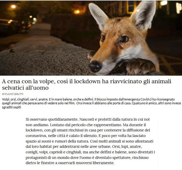 Notizie di animali....nel mondo - Pagina 7 Volpe10
