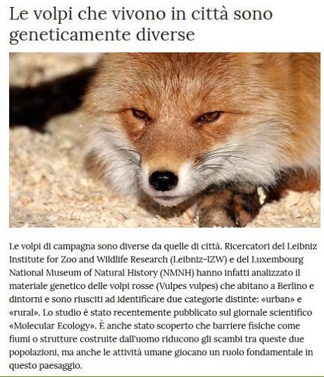 Notizie di animali....nel mondo - Pagina 2 Volpi10