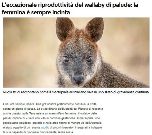 Notizie di animali....nel mondo - Pagina 2 Wallab10