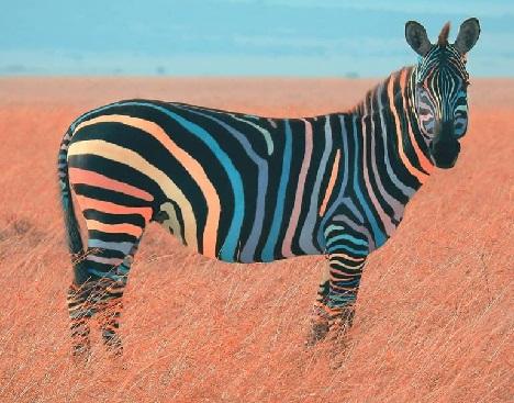 Animali... strani - Pagina 5 Zebra10