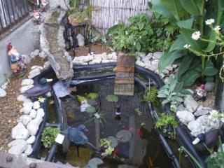 Aménagements du bassin! Imgp3310