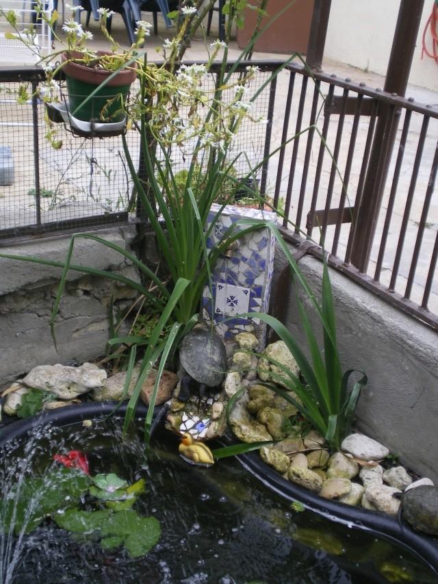 Aménagements du bassin! Imgp4218