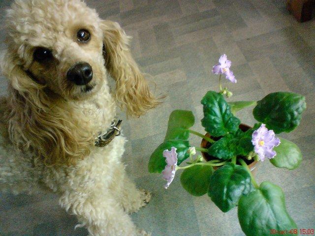 7. Растения и животные D10