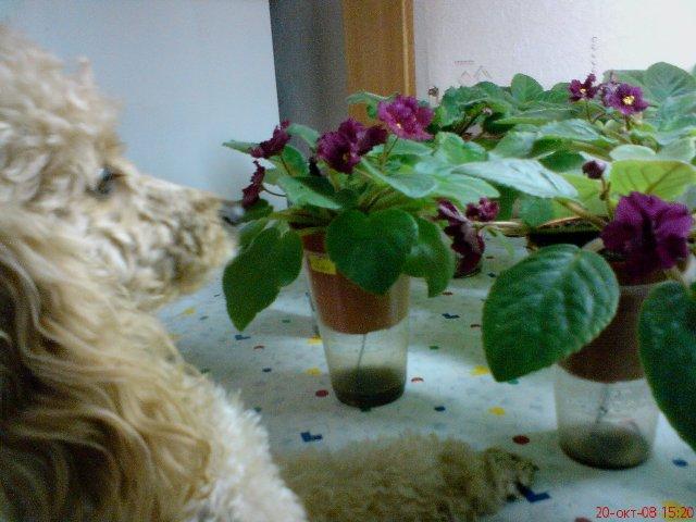 7. Растения и животные Dddd10