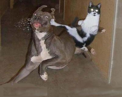 صور قطط مضحكة 210