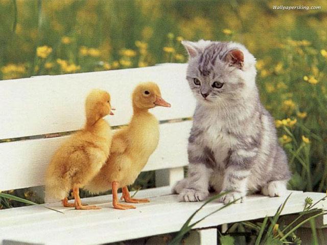 صور قطط مضحكة 22010