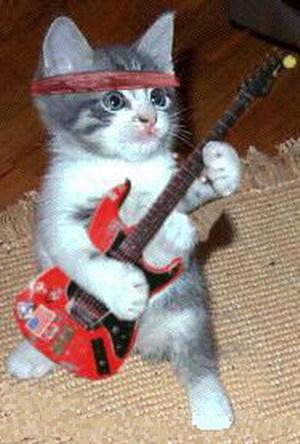 صور قطط مضحكة 2210