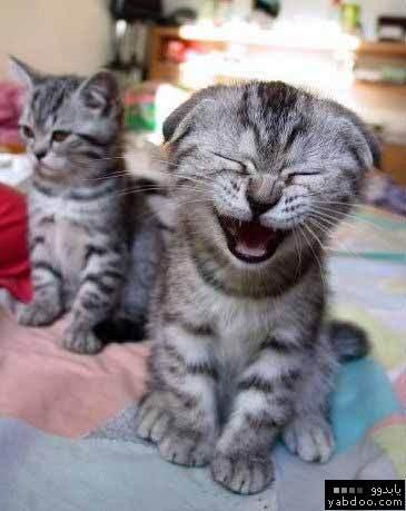 صور قطط مضحكة 2270_p10