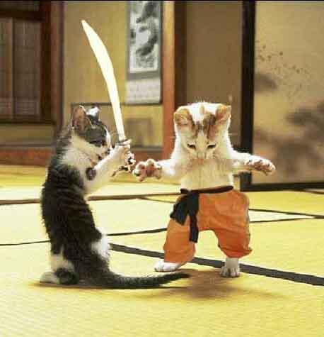 صور قطط مضحكة 572611