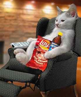 صور قطط مضحكة 6674_110