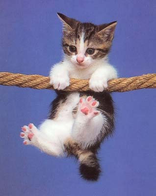 صور قطط مضحكة Chaton10