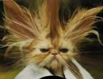 صور قطط مضحكة Medium10