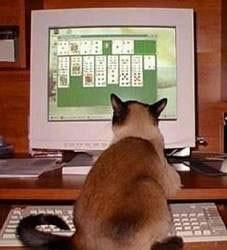 صور قطط مضحكة Medium13