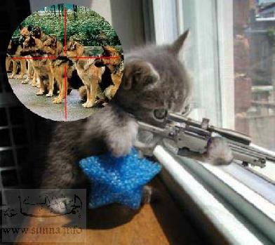 صور قطط مضحكة Sunna_10