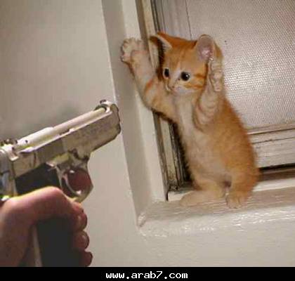 صور قطط مضحكة Uoo10