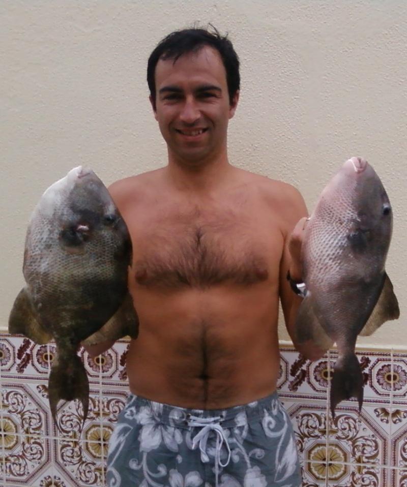 Peixe-Porco Forum10
