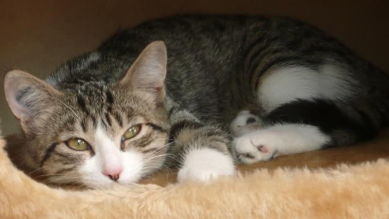 3 chatons, 2 filles, 1 mâle, 3, 5 mois - Page 3 P1020011
