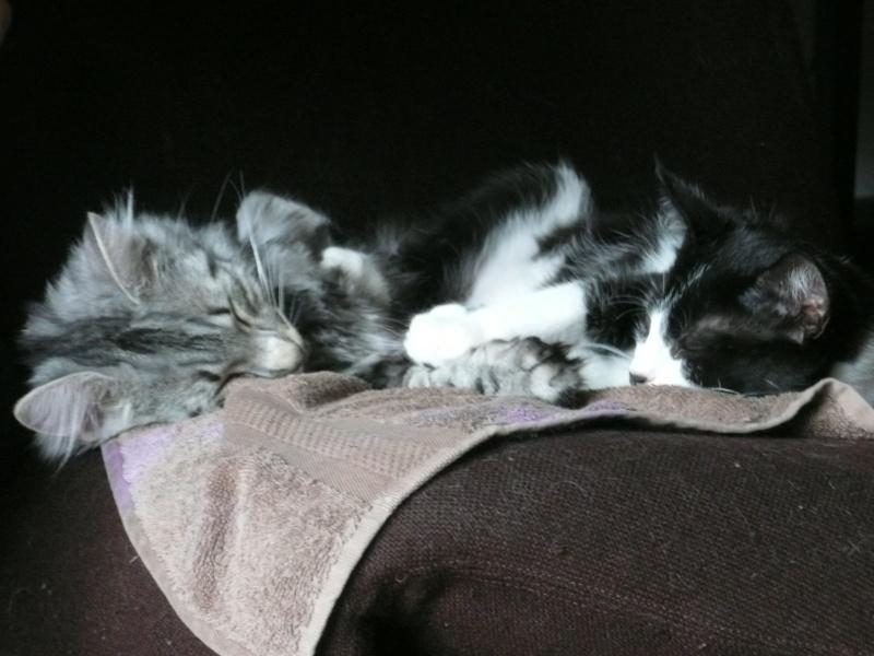 3 chatons, 2 filles, 1 mâle, 3, 5 mois - Page 4 P1020110
