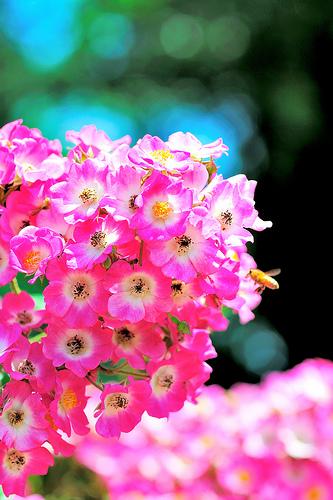 la fleur mystère 25430811