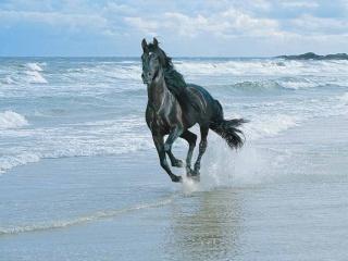 Me kõik armastame hobuseid!