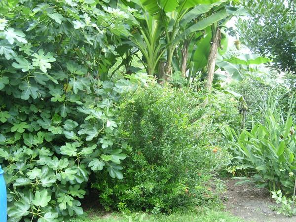 Visite d'un jardin privé. Nak1110
