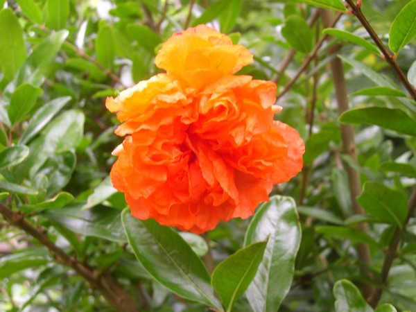 Visite d'un jardin privé. Nak1210