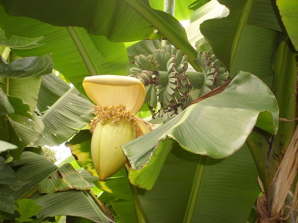 Visite d'un jardin privé. Nak1310
