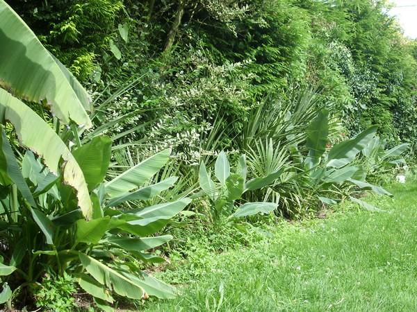 Visite d'un jardin privé. Nak410