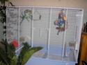 voila la nouvelle cage pour mes perruches! Photo_28