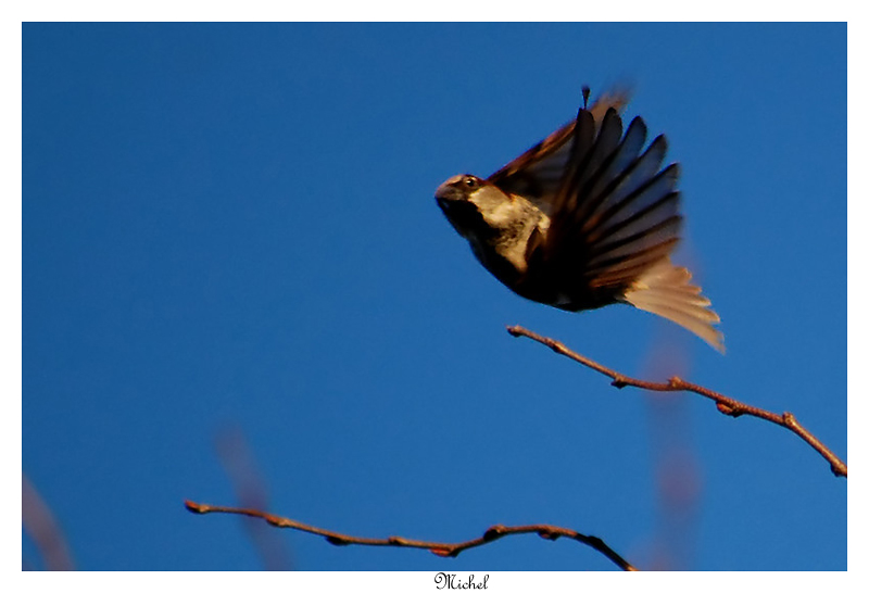 Oiseaux en vol Acroba10