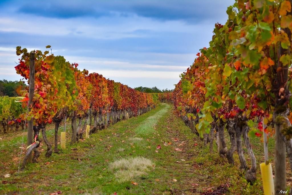 Samedi 10 octobre Vignes10