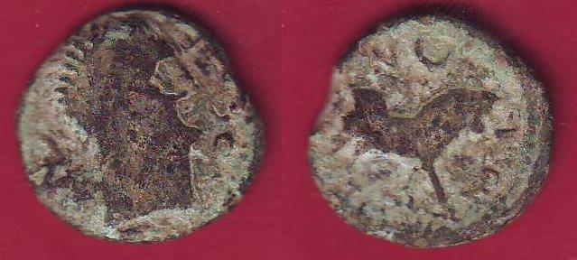 Semis de Castulo (FAB728) Castul10