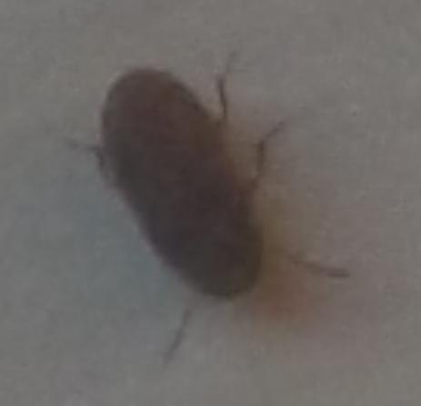 [Bla bla bla...] CC envahi par des insectes Insect10