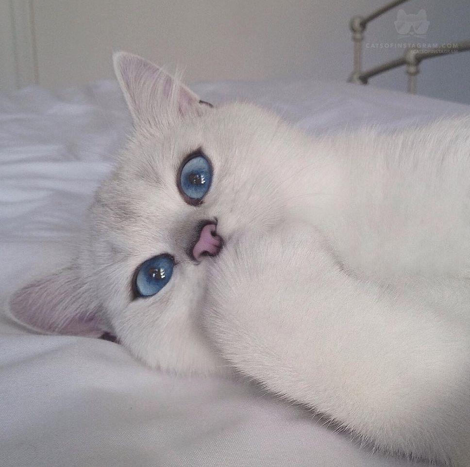 Zavez des chats ?? - Page 2 49482c11