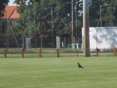 12/07 - marche sportive : le moulin Arnaudin Dscn1812
