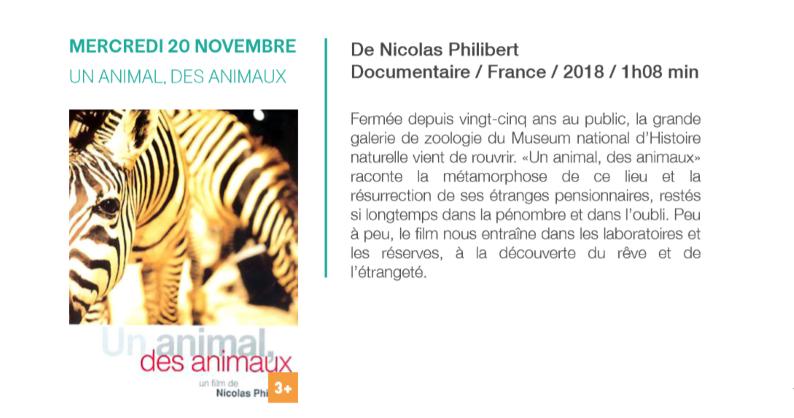 20/11 - Cinéma jeunesse :  Un animal, des animaux Sans_120
