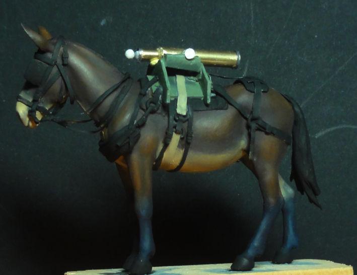 Mulet d'artillerie Sénégal 1856 Dsc00118