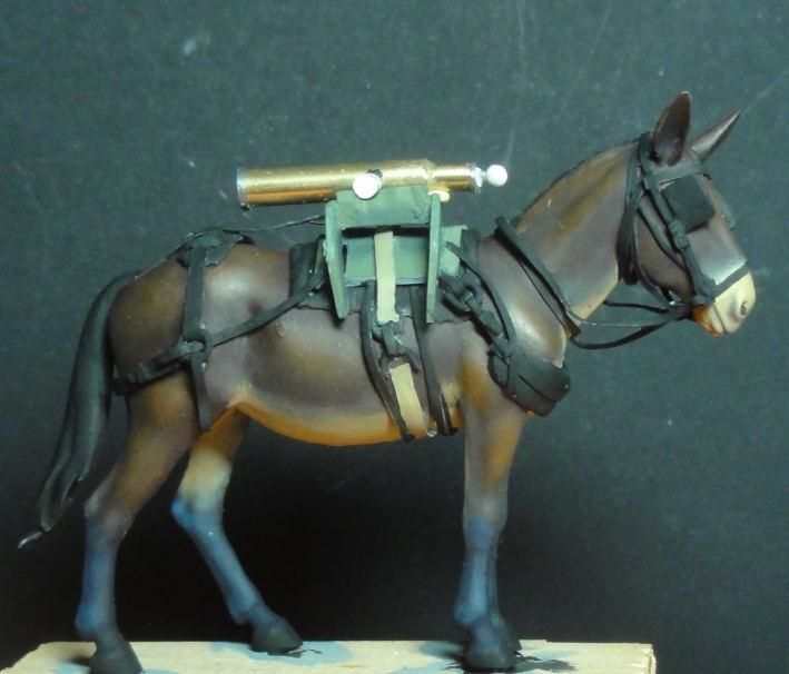 Mulet d'artillerie Sénégal 1856 Dsc00119
