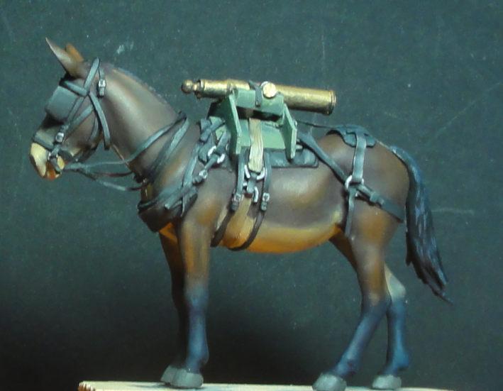 Mulet d'artillerie Sénégal 1856 Dsc00123