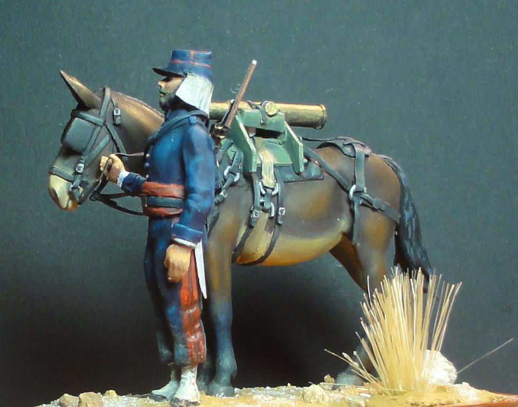 Mulet d'artillerie Sénégal 1856 Dsc00130