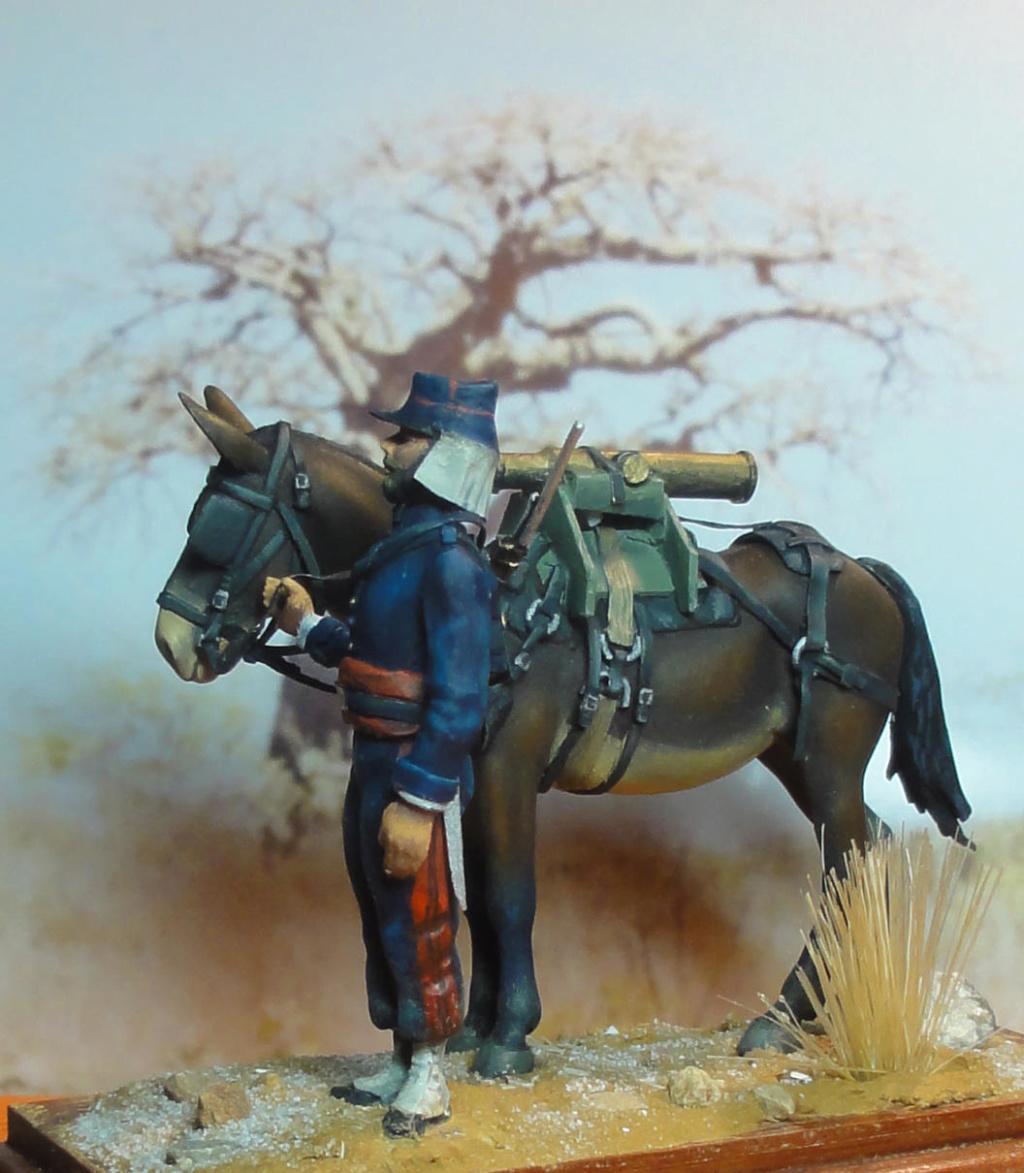 Mulet d'artillerie Sénégal 1856 Dsc00131