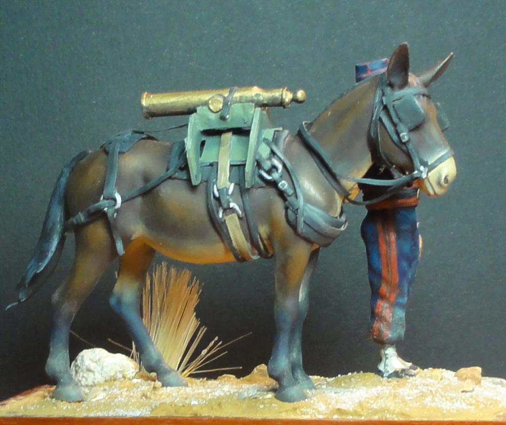 Mulet d'artillerie Sénégal 1856 Dsc00211