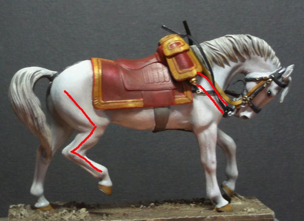 Encolure de cheval Dsc09738