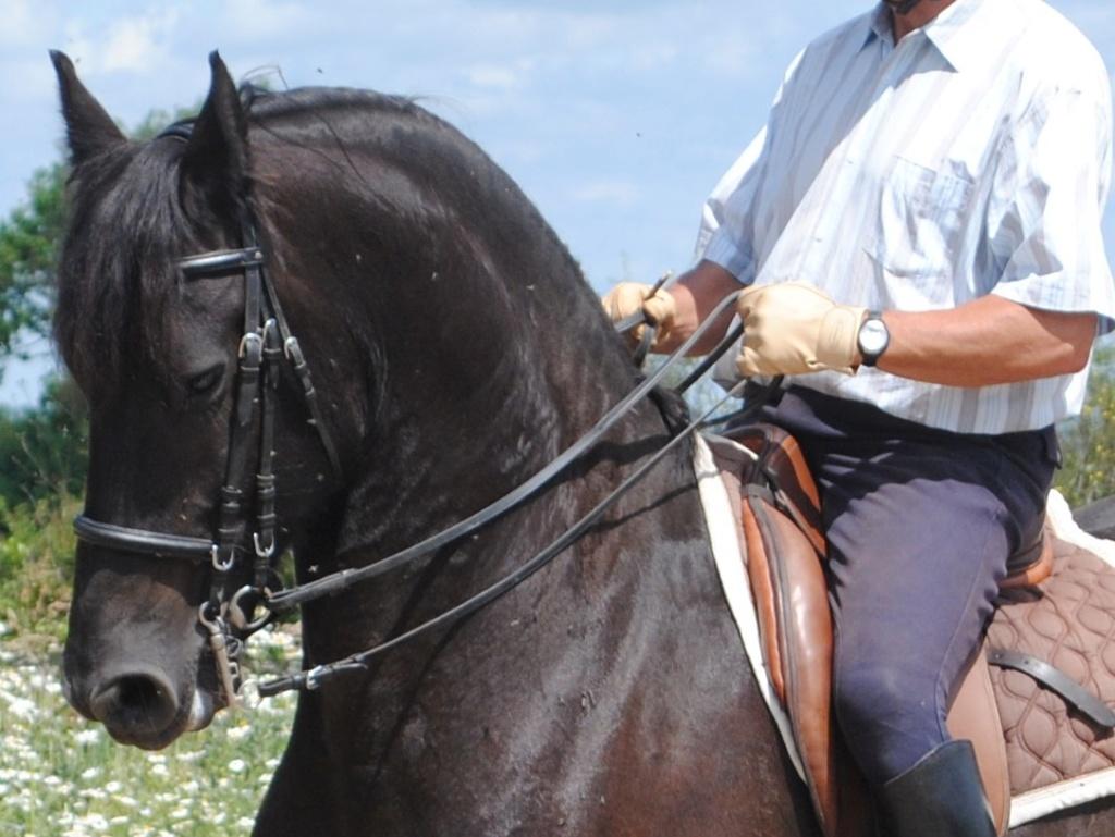 Créer gueule de cheval ? Dsc_0710
