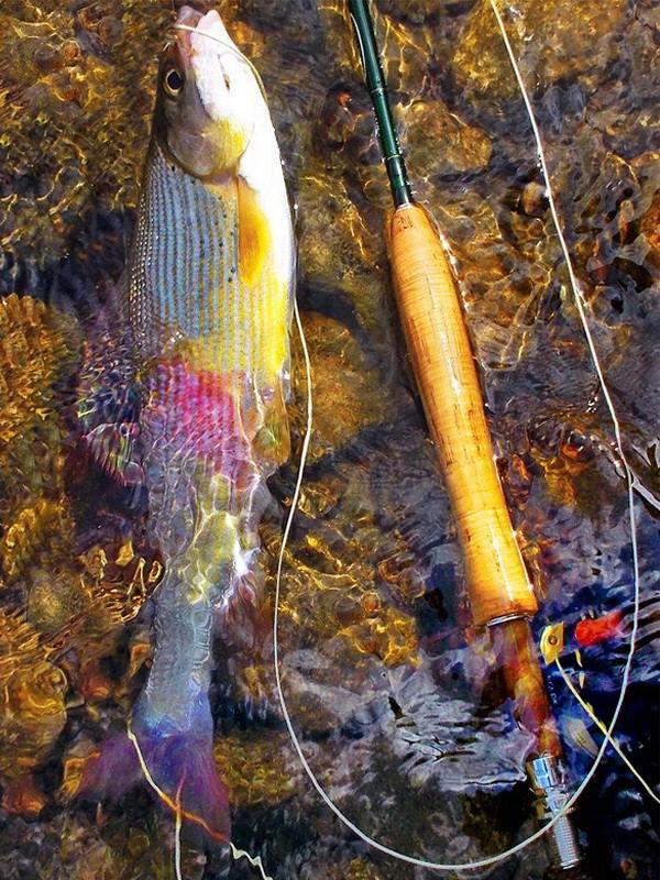 Fotografije ulova, ribe, oprema i dr. - Page 16 48362111