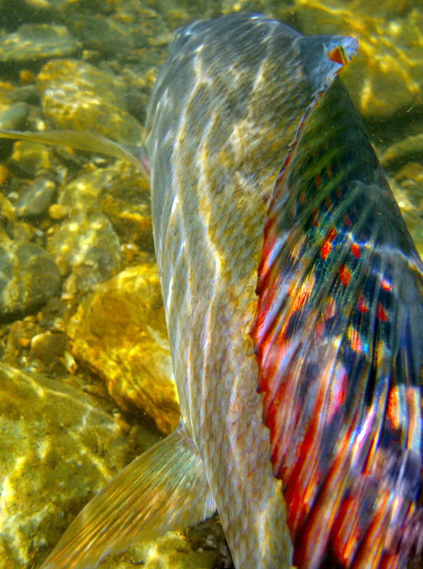 Fotografije ulova, ribe, oprema i dr. - Page 18 Dscn1320